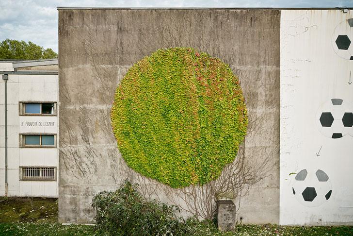 """Artista faz """"grafites naturais"""" utilizando trepadeiras"""